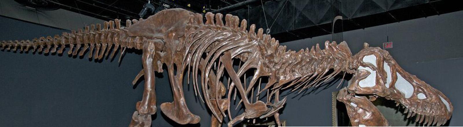 Tyrannosaurus-Rex-Skelett im Naturhistorischen Museum in Los Angeles.